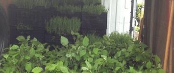 Gregory's Groen Onderhoud - Hamme - Tuinaanleg