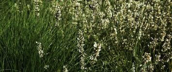 Gregory's Groen Onderhoud - Hamme - Tuinonderhoud